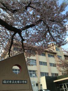 大塚小学校の桜