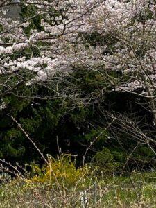 ローザンベリー多和田(滋賀県)